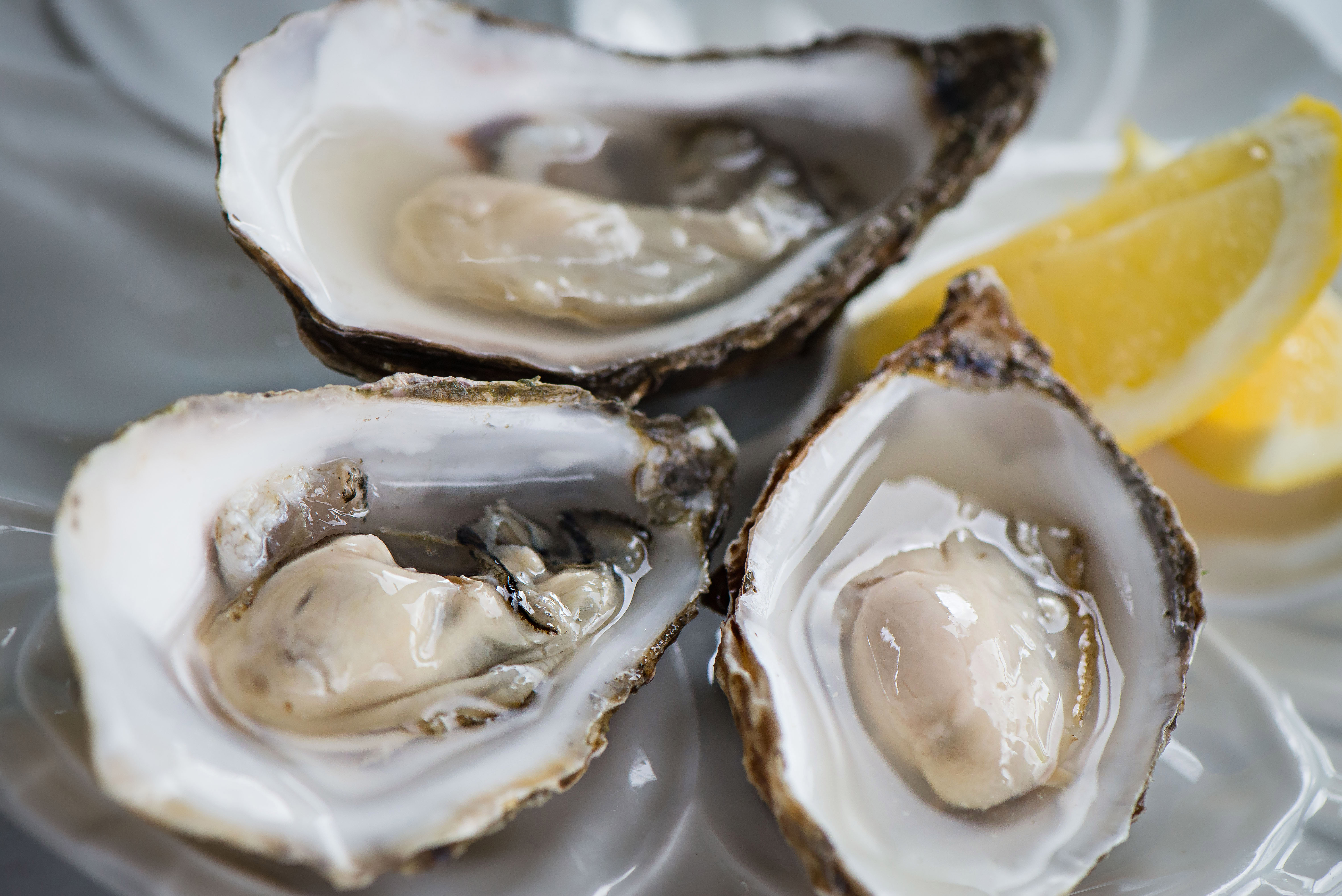 oysters-11.jpg